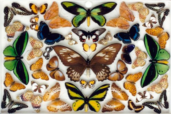 butterfly_600_400